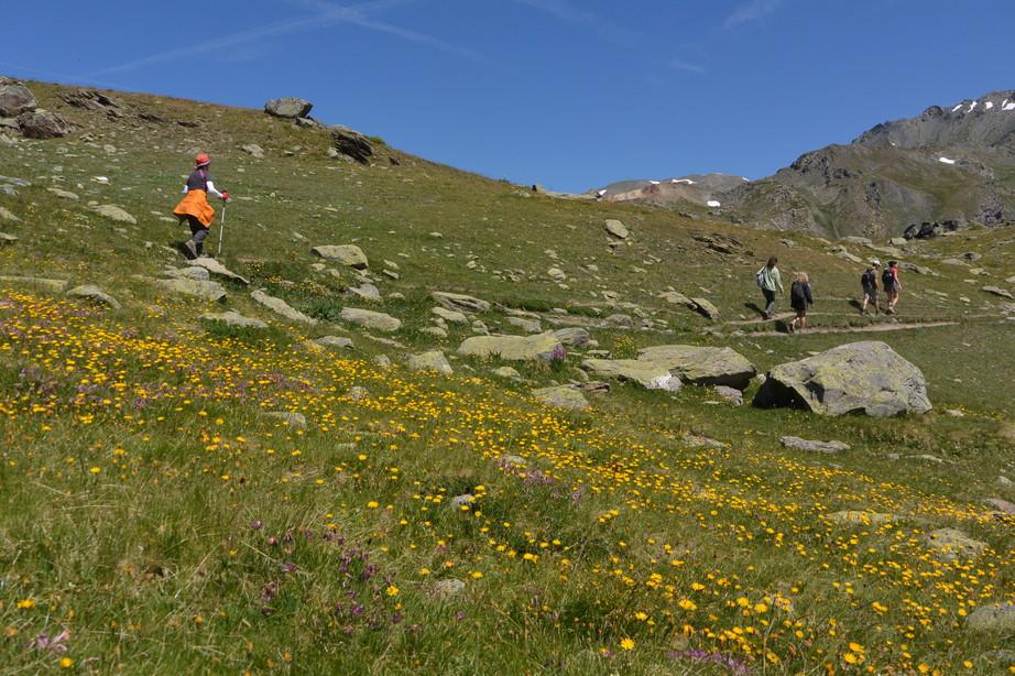 """2015年7月 『アルプス、エクラン国立公園に咲く花々』 July 2015 \""""Flowers in Des Ecrins of the Alps\""""_c0219616_182571.jpg"""