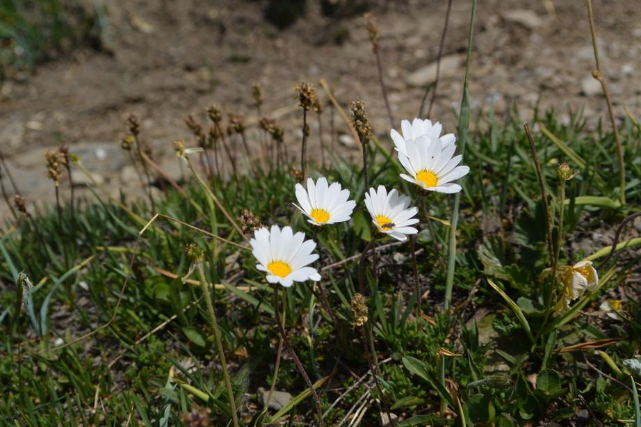 """2015年7月 『アルプス、エクラン国立公園に咲く花々』 July 2015 \""""Flowers in Des Ecrins of the Alps\""""_c0219616_1840389.jpg"""