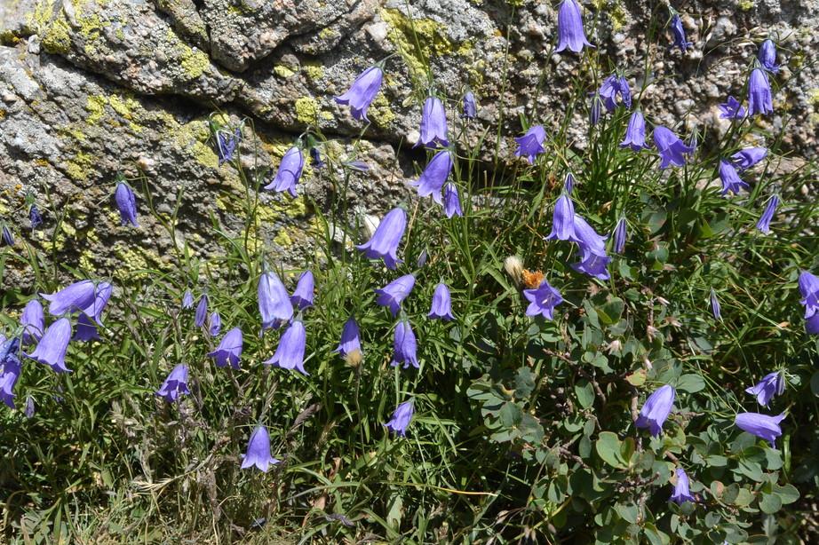 """2015年7月 『アルプス、エクラン国立公園に咲く花々』 July 2015 \""""Flowers in Des Ecrins of the Alps\""""_c0219616_18404094.jpg"""
