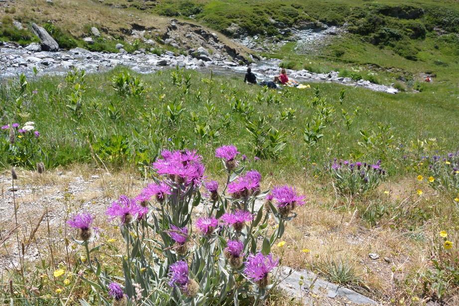 """2015年7月 『アルプス、エクラン国立公園に咲く花々』 July 2015 \""""Flowers in Des Ecrins of the Alps\""""_c0219616_18424827.jpg"""