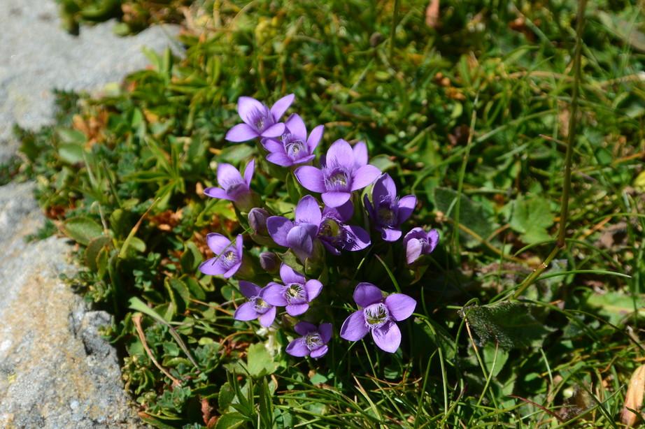 """2015年7月 『アルプス、エクラン国立公園に咲く花々』 July 2015 \""""Flowers in Des Ecrins of the Alps\""""_c0219616_18431296.jpg"""