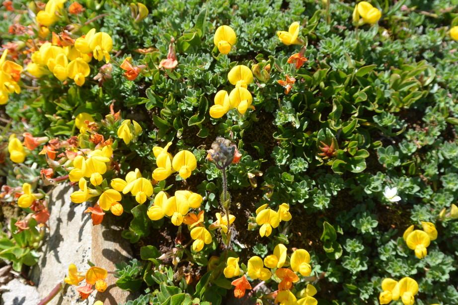 """2015年7月 『アルプス、エクラン国立公園に咲く花々』 July 2015 \""""Flowers in Des Ecrins of the Alps\""""_c0219616_18451672.jpg"""