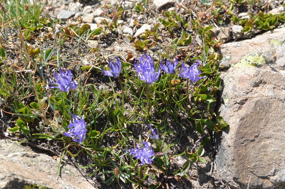 """2015年7月 『アルプス、エクラン国立公園に咲く花々』 July 2015 \""""Flowers in Des Ecrins of the Alps\""""_c0219616_18454144.jpg"""