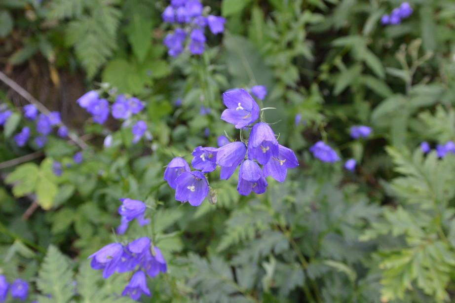 """2015年7月 『アルプス、エクラン国立公園に咲く花々』 July 2015 \""""Flowers in Des Ecrins of the Alps\""""_c0219616_18471345.jpg"""