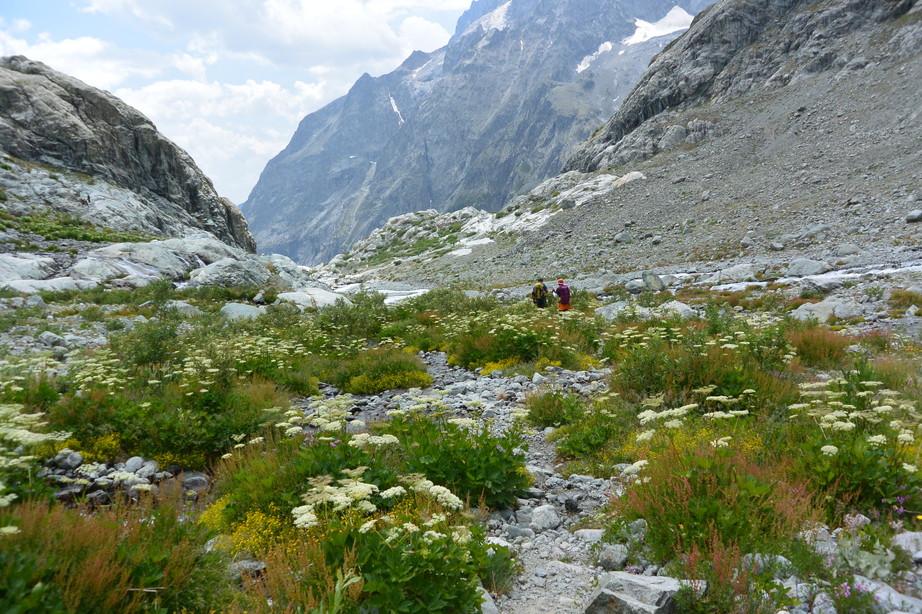 """2015年7月 『アルプス、エクラン国立公園に咲く花々』 July 2015 \""""Flowers in Des Ecrins of the Alps\""""_c0219616_18483285.jpg"""