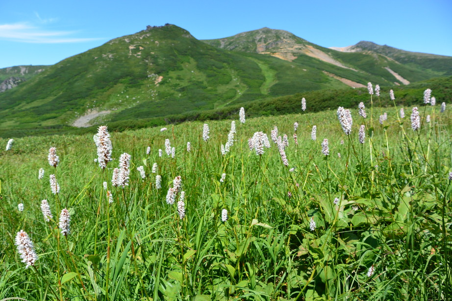 "2015年8月 『晩夏の大雪旭岳』 August 2015 ""Taisetsu-Asahidake in the late summer\""_c0219616_22365512.jpg"