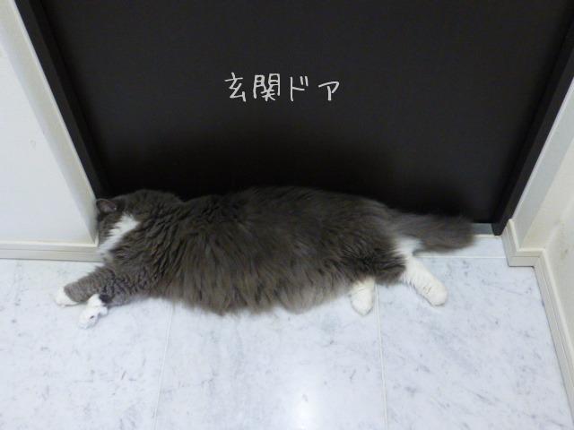 お邪魔虫シリーズ_e0237625_1733404.jpg