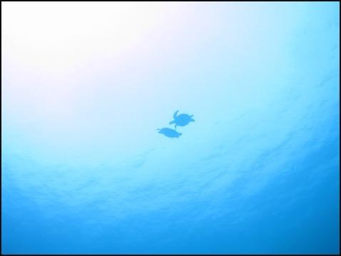 9月2日水納島ブルーだぁぁ!!_c0070933_22172614.jpg