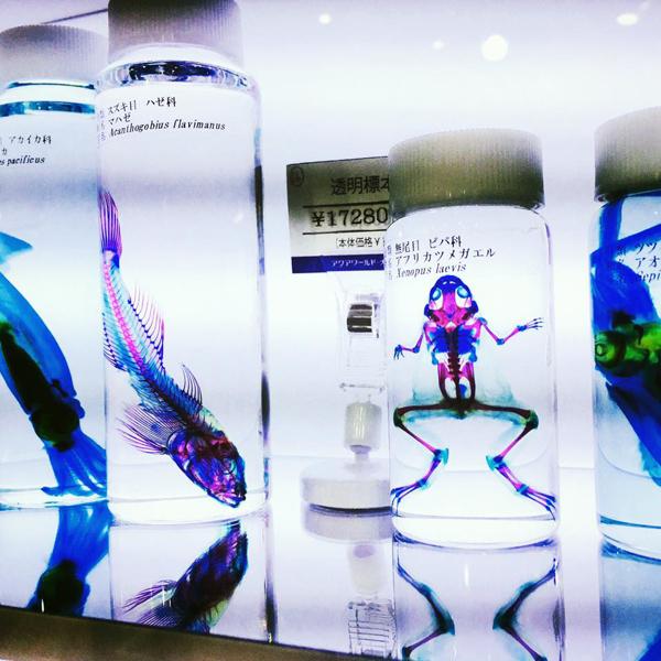 大洗水族館 / iPhone 6_c0334533_09595205.jpg