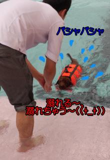 d0337539_22170994.jpg