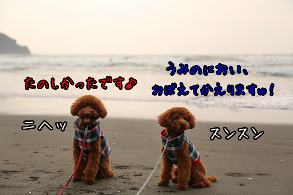 d0337539_22194710.jpg