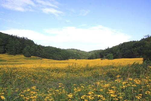 黄色の花畑なんだけど 9月2日_f0113639_1526228.jpg