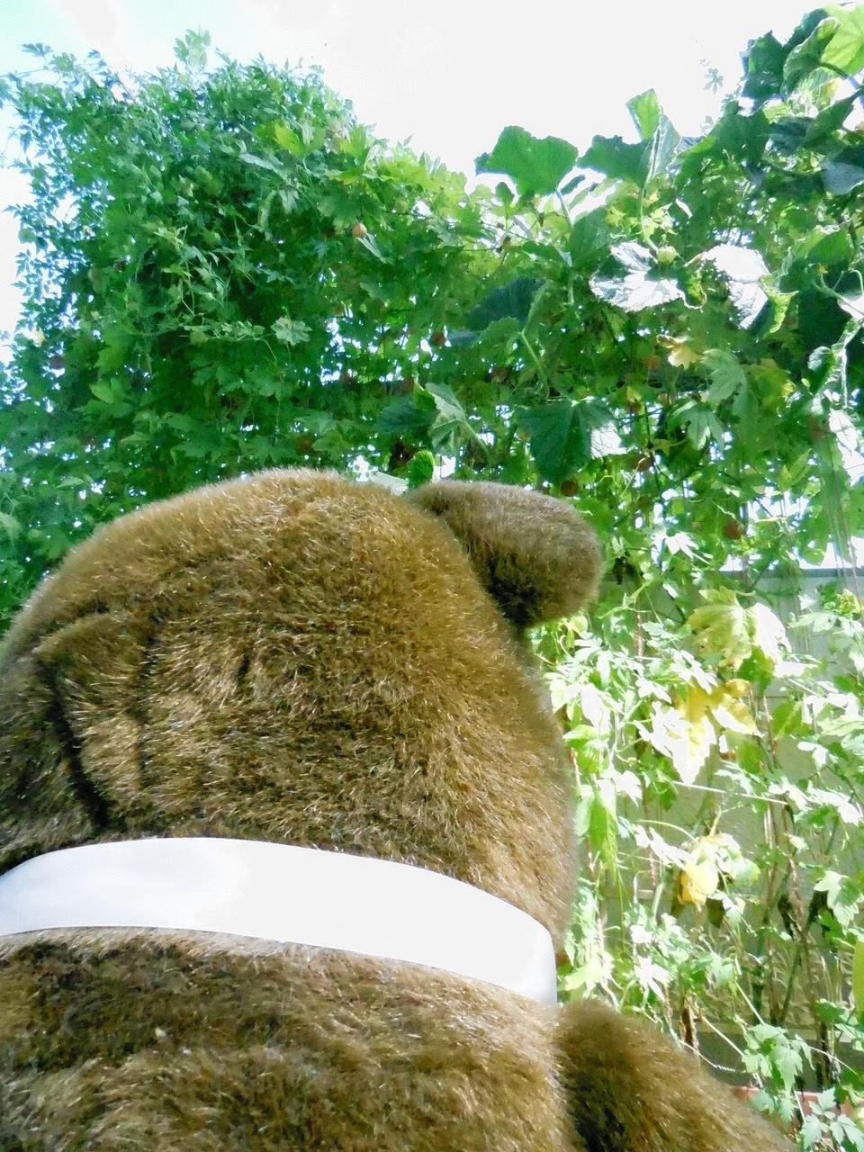 クマさんの分身?_e0356356_14320632.jpg