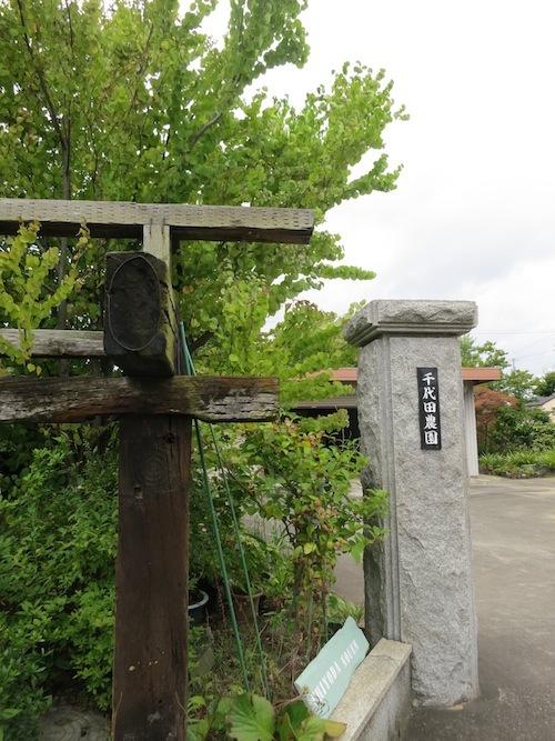 千代田農園_f0324766_14174712.jpg