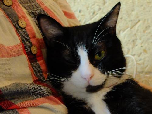 千匹猫_a0180681_1631046.jpg
