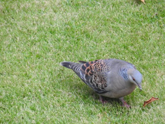 繰り返された鳩の悲劇 Doves\' Tragedy Again_f0268294_20090813.jpg