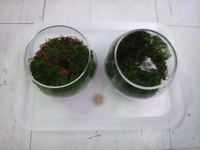 150903 熱帯魚・金魚・淡水魚・水草・観葉植物_f0189122_13184641.jpg