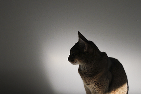 [猫的]琳派_e0090124_09885.jpg