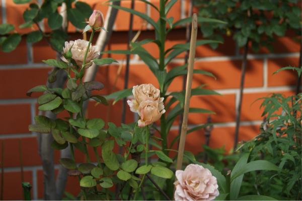 f0170524_20084608.jpg