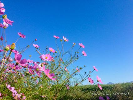 長野の高原で古楽を満喫しよう! はらむら古楽祭2015_c0067238_22545138.jpg