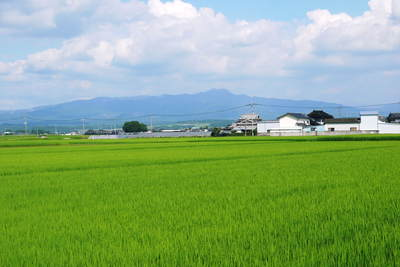 七城米 長尾農園 美しすぎる田んぼにお米の花が咲きました(2015年)_a0254656_1843048.jpg