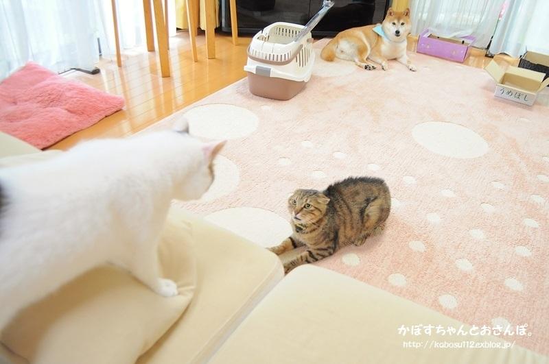 ぎんなん VS 春太郎_a0126590_21153735.jpg