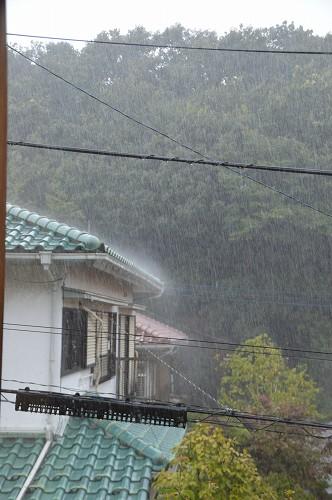 すっごい、雨でした。_c0124100_23103381.jpg