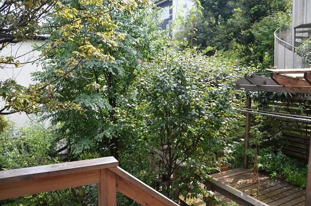 すっごい、雨でした。_c0124100_23111198.jpg