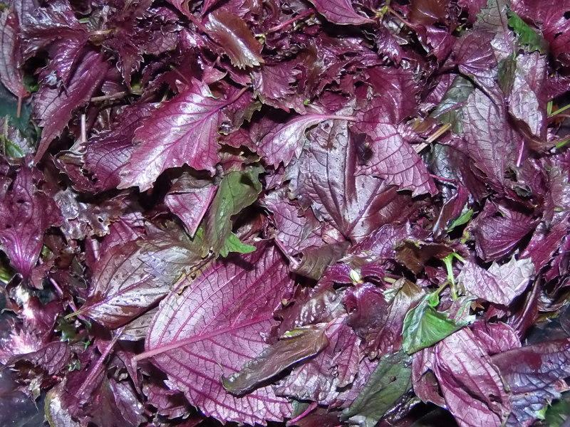 うちの畑の「赤じそシロップ」作り。_a0125419_18492281.jpg