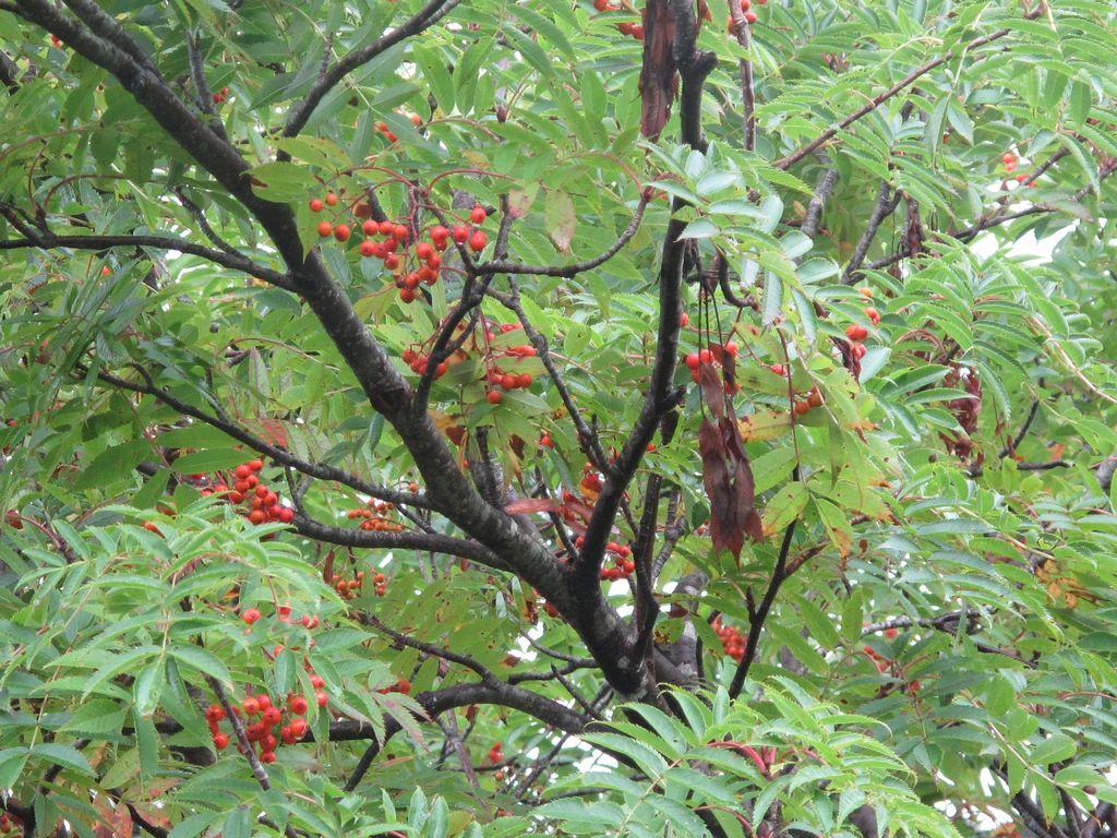 秋の気配_f0192924_10101279.jpg