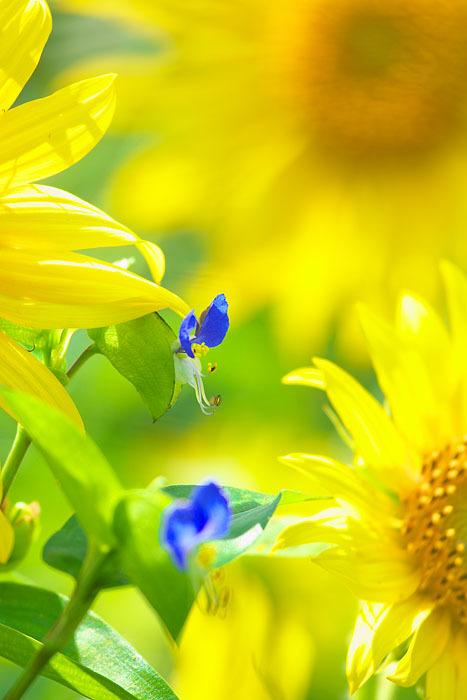 夏から秋へ_c0067040_22285285.jpg