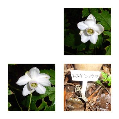 f0031546_20575746.jpg