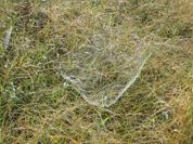美しい蜘蛛の巣の集落_f0000163_16265050.jpg