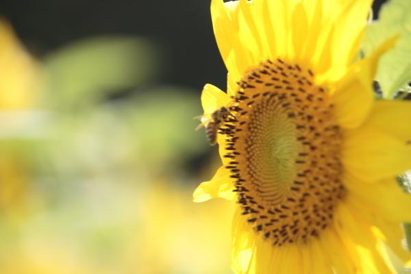 f0330364_19153596.jpg