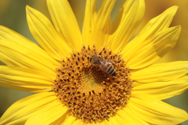 f0330364_19155233.jpg