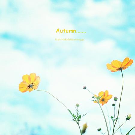 秋の青空~_e0221779_15122745.jpg
