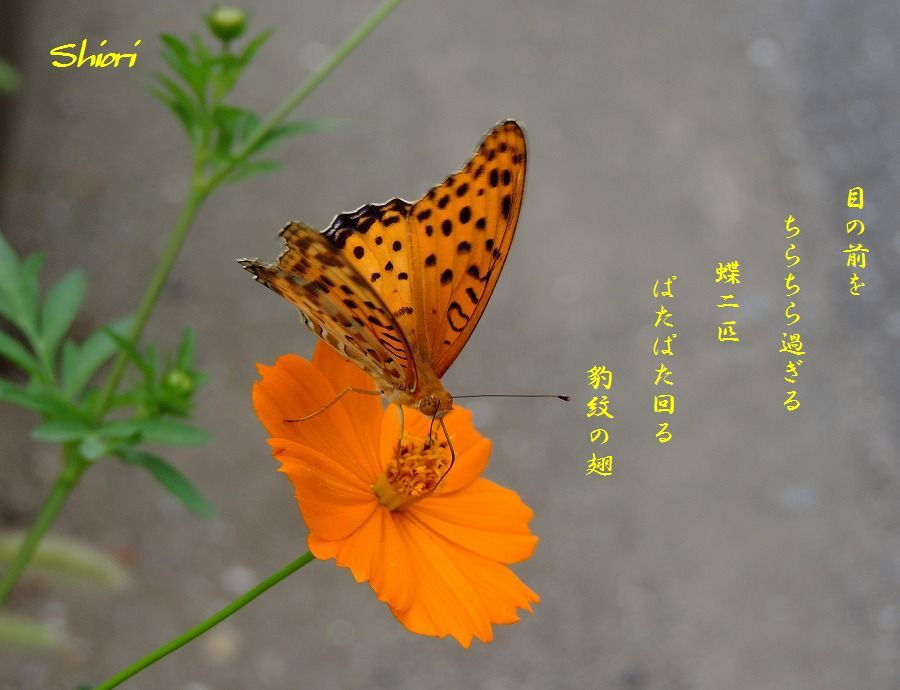 c0187781_23510575.jpg
