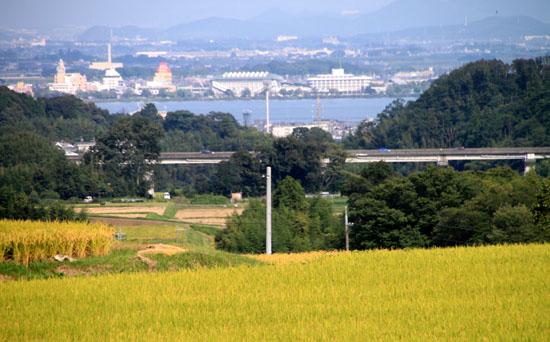 棚田の稲刈り_e0048413_2032260.jpg