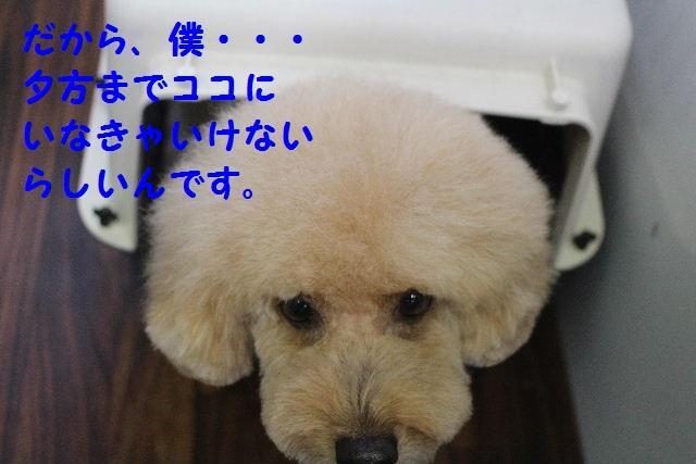 b0130018_2316538.jpg