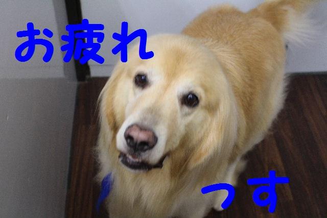 b0130018_23181256.jpg