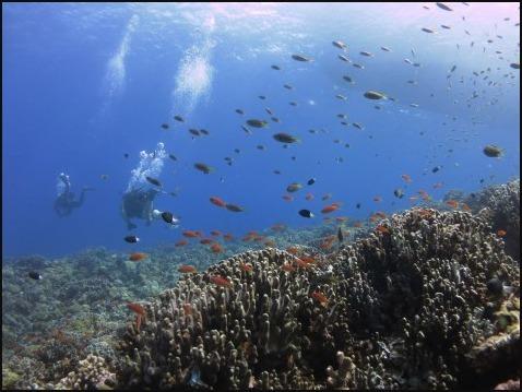 9月5日慶良間ダイビング&青の洞窟体験ダイビング_c0070933_21011378.jpg