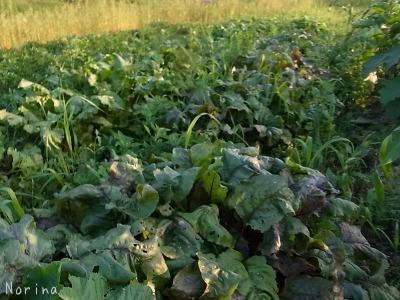野菜が、野菜がアルベロベッロ!^^!_e0326953_16283526.jpg