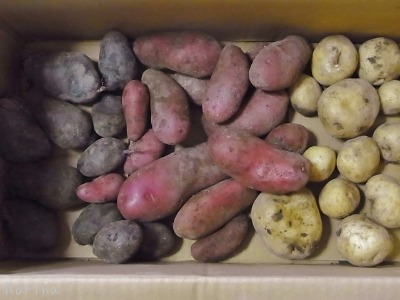 野菜が、野菜がアルベロベッロ!^^!_e0326953_16361573.jpg