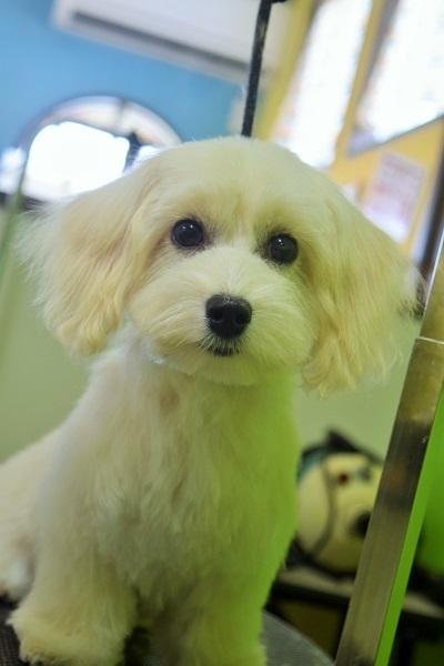 子犬ちゃん♡_b0347262_18395942.jpg