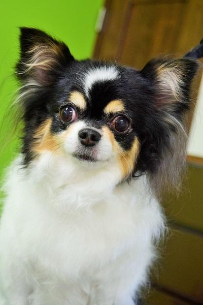 子犬ちゃん♡_b0347262_18413078.jpg
