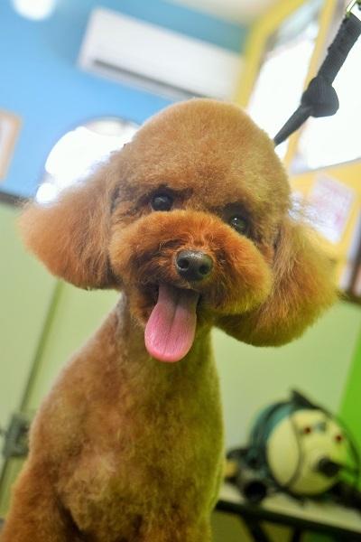子犬ちゃん♡_b0347262_18422115.jpg