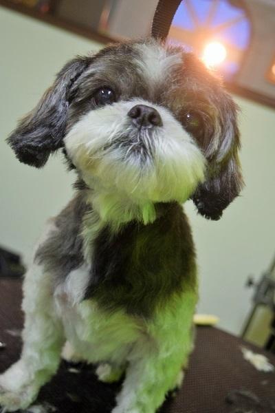 子犬ちゃん♡_b0347262_18423219.jpg