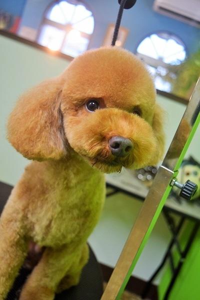 子犬ちゃん♡_b0347262_18425604.jpg