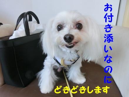 b0193480_1150540.jpg