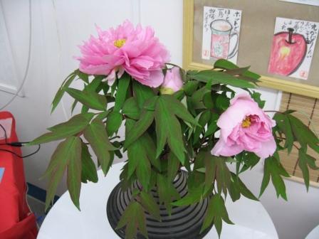 お花咲きまくりです_d0337981_15354220.jpg